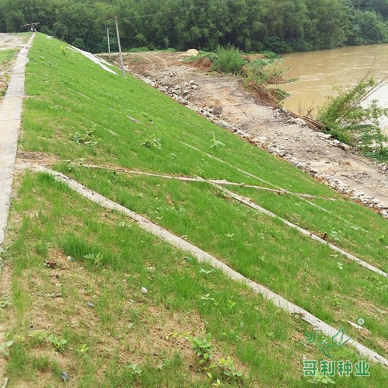 清远佛冈龙山河提工程