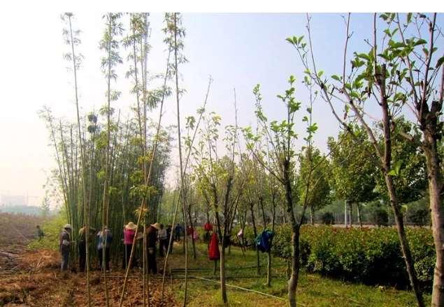 注意了春季园林绿化养护误区