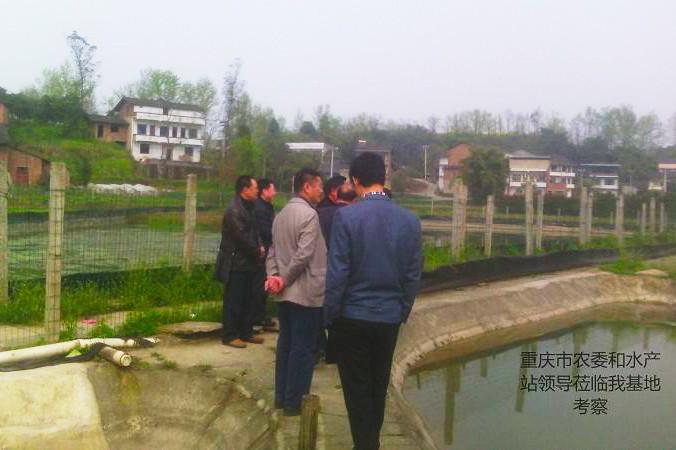 重庆市农委和水产站领导莅临我基地考察