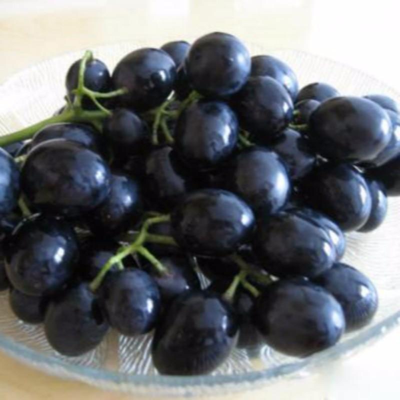 摩尔多瓦葡萄 种苗