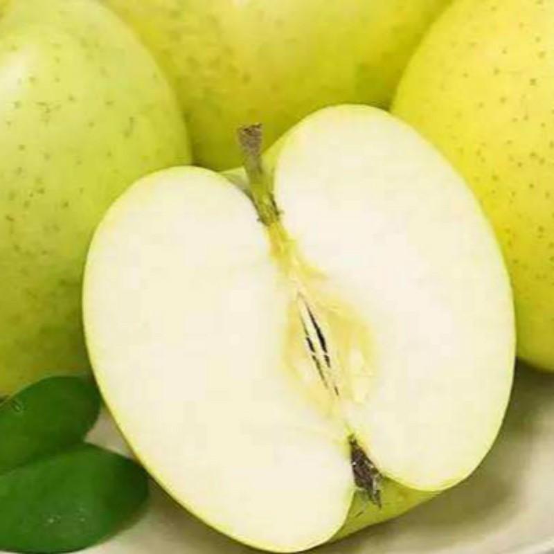 王林苹果 种苗