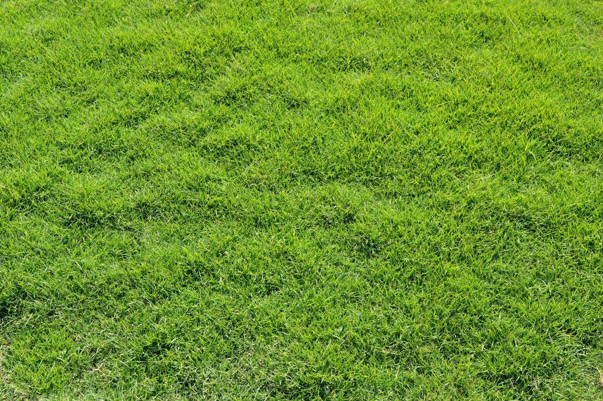 護坡一般用什麽草種草種籽 綠化工程護坡