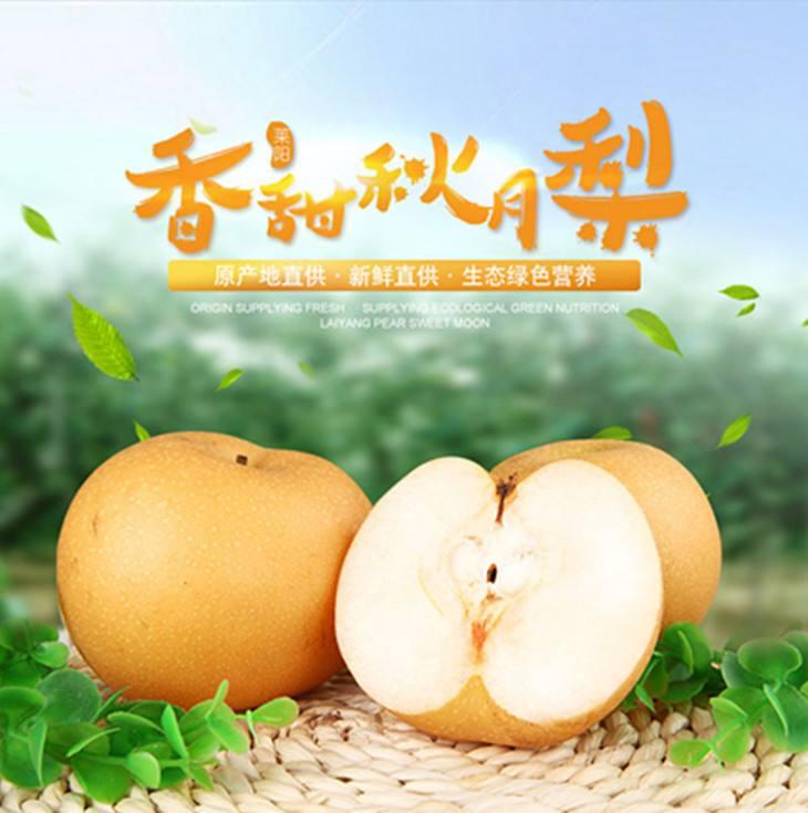 秋月梨 种苗
