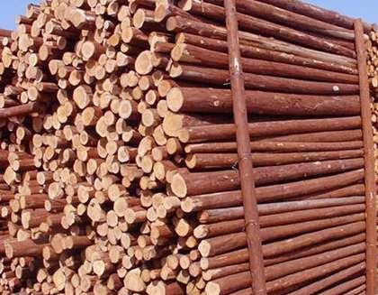 杉木桩开裂的因素有哪些