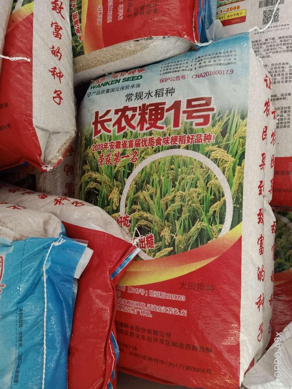 常规水稻种子
