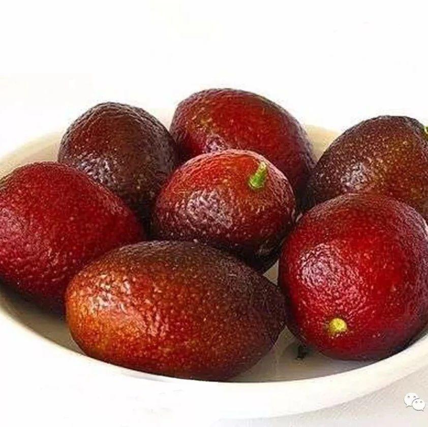 澳洲血檬 种苗