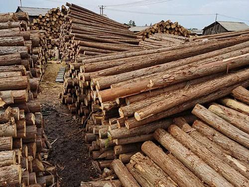 园林绿化桩厂家