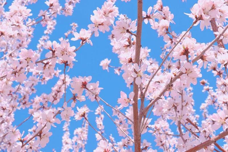 【全民赏花季】逛花海、嗅春风、看《大漠传奇》,七星湖带你玩转春天!