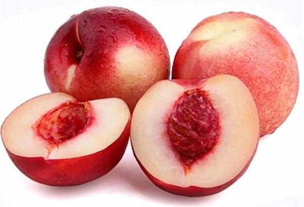一品红桃 种苗