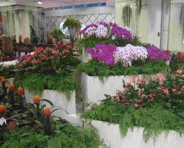 花卉租摆业务中出现的情况怎样解决