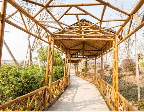 竹长廊的相应维护情况说明