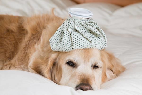 宠物也要防中暑,你听过吗?