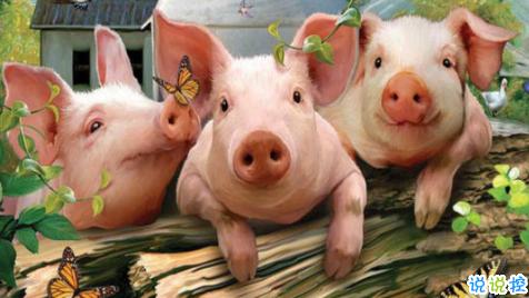 栾川知名猪药大批量现货