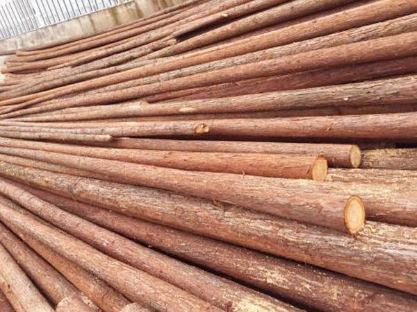 杉木杆厂家为您介绍如何挑选高质量的杉木