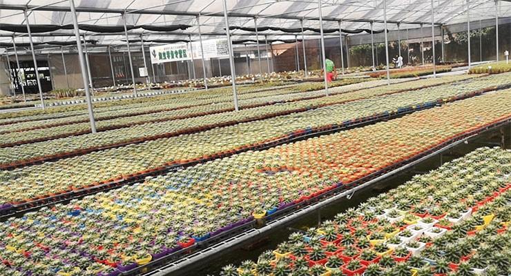 2019年新型花卉温室大棚