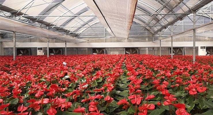 新型农业温室