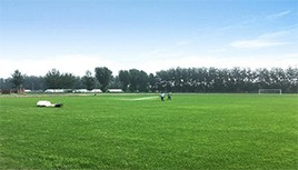 四川草坪害虫防治