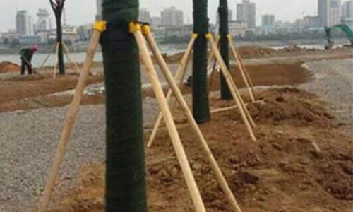 怎样的苗木需要使用绿化支撑杆?