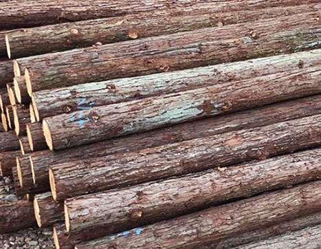杉木桩发生开裂是因为什么