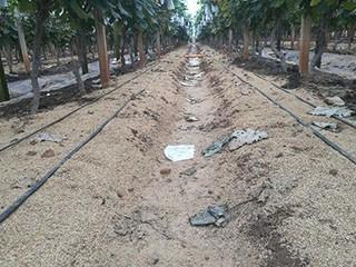 压缩稻壳土壤改善