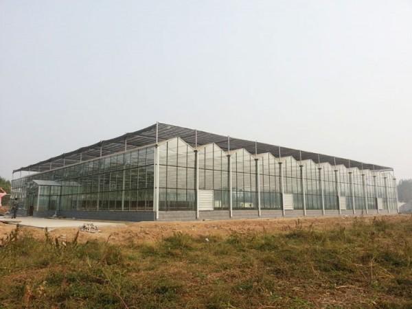 纹络式玻璃温室工程