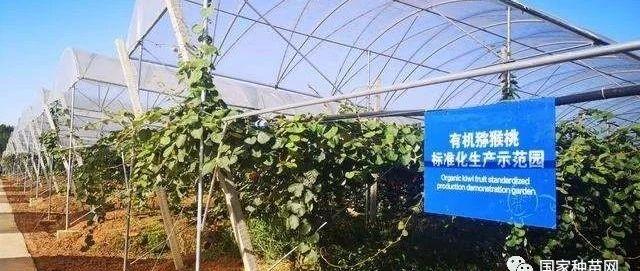 """中科院武汉植物园种出高端猕猴桃""""金桃"""""""