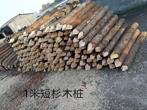 短木桩价格