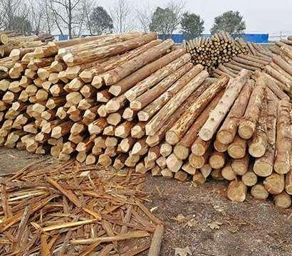 杉木桩的选择应从哪些方面入手