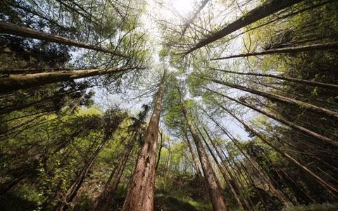 湖北十堰今年拟建13个森林康养基地