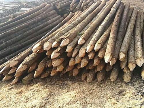 杉木桩厂家