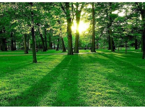 园林绿化工具需要哪些