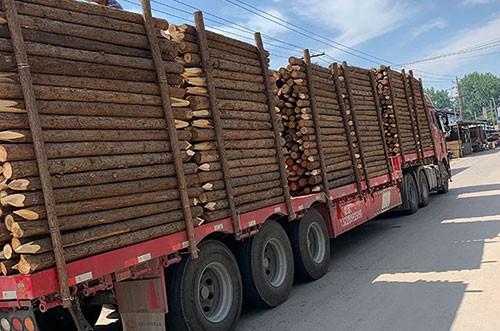 杉木绿化桩