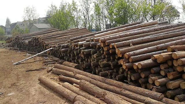 生态木桩价格