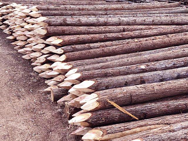 杉木桩的品质为后期带来的保障