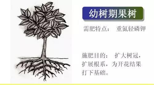 果树的需肥特点及施肥技术