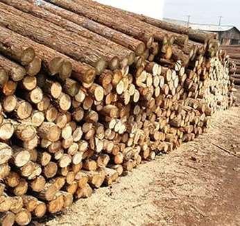 景观河道松木桩种植装置介绍