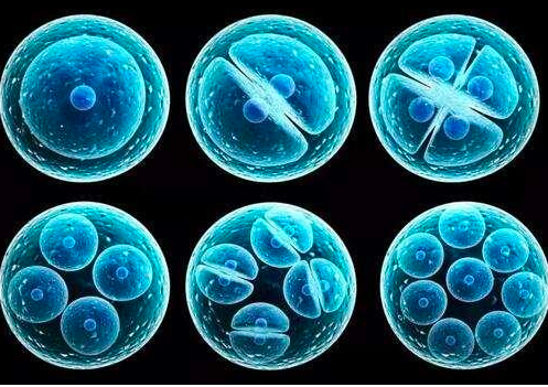 肿瘤干细胞研究新发现
