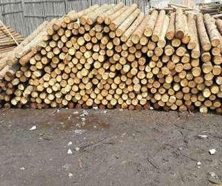 质量不好的杉木桩如果使用会怎么样