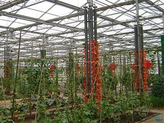 2010河南农业大学扶沟蔬菜研究院展示棚