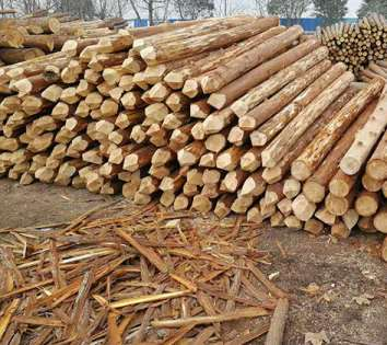杉木桩的寿命出现问题的因素