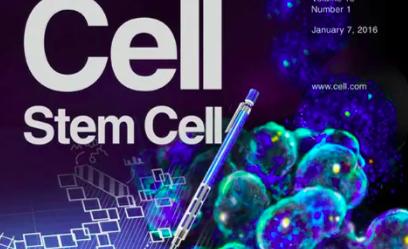 干细胞引导的再生医学前景光明