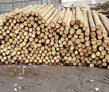 杉木桩的采购的关键点叙述