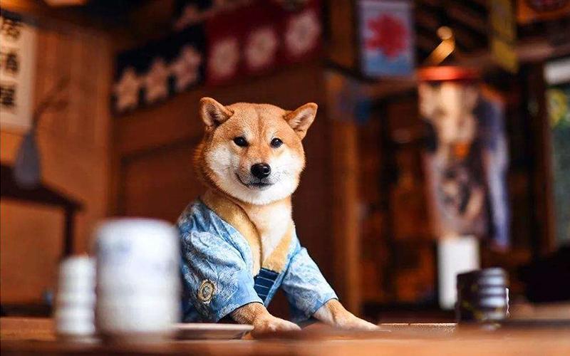 宠物狗基本护理知识