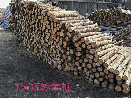 江苏短木桩