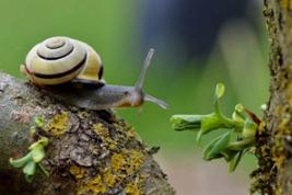 海阳尼龙6原创一只蜗牛的远行