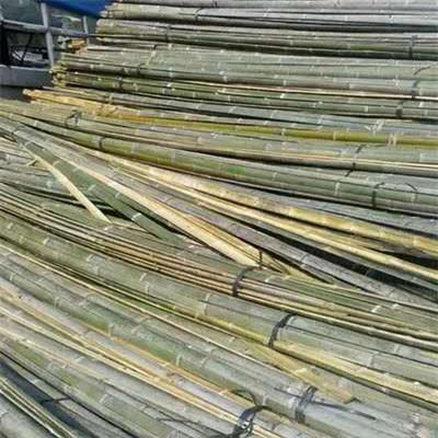 你有详细了解过竹子的用途吗?