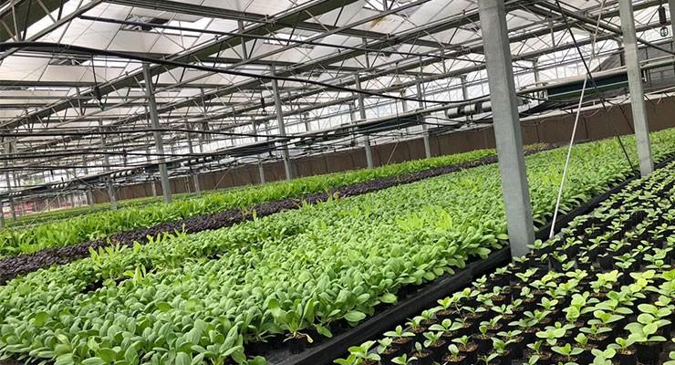 新型蔬菜温室