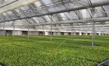科研温室建造