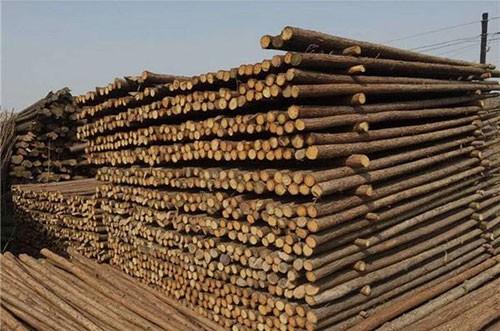 杉原木备货充足