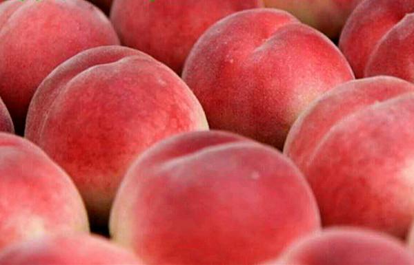超级珍品王桃 种苗